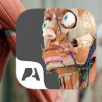 Pocket Anatomie Feature