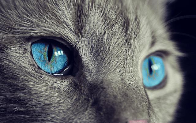 Cat 1285634 640 Crunch